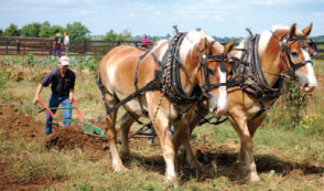 Student Plowing a field with horses