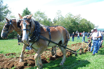 A draft horse team demonstrates non-mechanical plowing techniques at the 2011 Draft Horse Day.