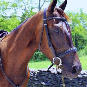 Ivan the Horse