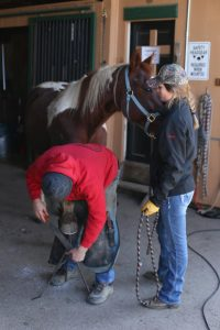 Farrier working on a horse hoof