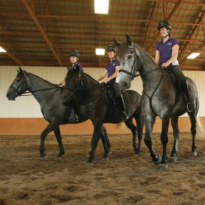 Horses training in an indoor arena