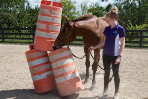 a horse pushing over a stack of orange road construction barrels