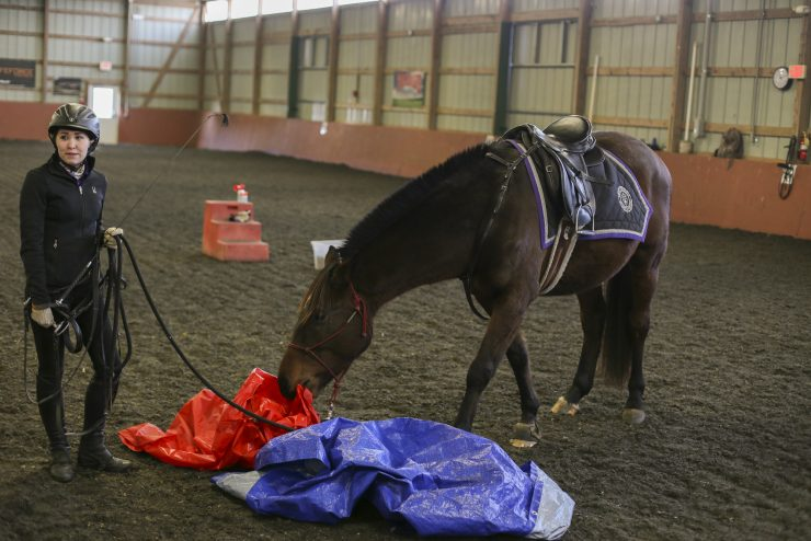 a horse sniffing some tarpaulins