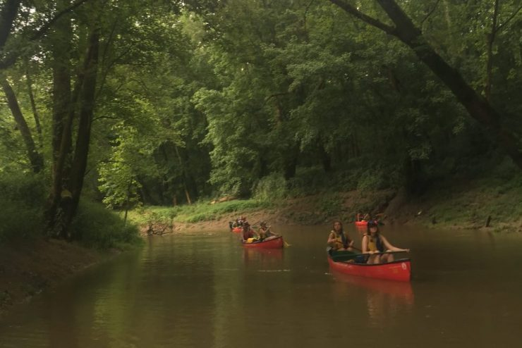 people paddling canoes on a river underneath large trees